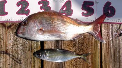 DSCF4587